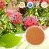 Polvere naturale Salidroside 98% dell'estratto di Rhodiola Rosea P.E Rhodiola Rosea