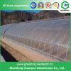 Дешевый аграрный парник полиэтиленовой пленки солнечный для Vegetable засаживать