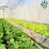 مصنع يحمي حشية [أوف] زراعة [سبونبوند] [نونووفن] بناء لأنّ خضرة وحديقة