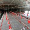 Aves domésticas que levantam o equipamento para a produção da galinha (JCJX-152)
