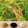 自然な米糠のエキスのフェルラ酸