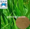 Hersteller-Zubehör Salicin weiße Weide-Barke-Pflanzenauszug