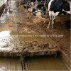 Geflügel Manure Scraper Machine für Cow Farm