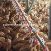Equipamento de cultivo automático das aves domésticas da alta qualidade do jogo completo