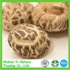 Cogumelo de Shiitake secado
