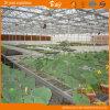 Planting Vegetables를 위한 긴 생활 Span 다중 Span Glass Greenhouse