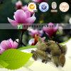 Fleur naturelle de magnolia de matière première de phytothérapie
