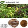Выдержка Eleutherosides 0.8% Acanthopanax Gracilistylus