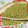 Organische grüne Mungobohnen China-