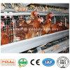 Matériel automatique de cage de couche de ferme avicole