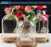 Tarro de cristal del Cloche de D12*H20 Bell con diseño de la tapa de la belleza