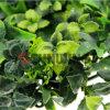 인공적인 잎 담을 맞물리는 옥외 인공적인 산울타리