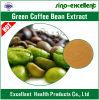 Estratto verde naturale del chicco di caffè con acido clorogenico
