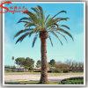 Prezzo non Xerox albero di plastica artificiale della palma da datteri dei 6 tester