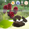 Phytothérapie organique Sanguisorba Officinalis
