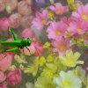 40X40mesh het groene Scherm van het Venster van de Kleur