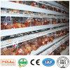 Fábrica da gaiola da galinha da bateria de China