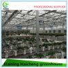 Парник Graden стеклянный тропический для земледелия