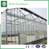 De Groene Huizen van de Landbouw van het glas voor Tomaten/Bloemen