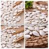 Gérmenes de calabaza blancos como la nieve secados nueva cosecha con el origen de la alta calidad de China para las ventas al por mayor
