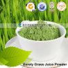 Haval marcados alta calidad deshidratada apenas Polvo de jugo de hierba