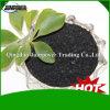 Fertilizzante organico nero dell'estratto dell'alga