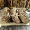 Fungo di Shiitake liscio organico del AAA del grado della Cina