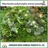 20%のLiverwort/MarchantiaのPolymorphaのエキスの粉、50%のサポニン