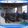 PET knotenloses Fisch-Netz (SDC17845)