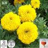 Neues allgemeines Biopestizid-Ringelblume-Wurzel-Auszug Alpha-Terthienyl 0.1%