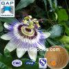 Extrait d'usine de fleur de passiflore avec l'échantillon libre