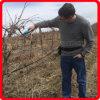 Перепуск инструментов Koham аттестованный CE Scissors ножницы электричества Pruners Secateurs Loppers батареи лития лесохозяйства работая электрическими приведенные в действие триммерами подрежа