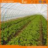Serra dell'arco per la piantatura di verdure