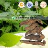 Scrophularia herbario natural Ningpoensis Hemsl. de la materia prima