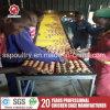 A camada do projeto de África prende explorações avícolas para a venda