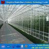 きゅうりの成長のための高品質によってカスタマイズされるガラス温室