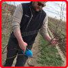 Herramientas Koham FCC Certificados Bypass Tijeras de podar Huertos Trimming Handheld loppers energía de la batería de litio tijeras podadoras eléctricas tijeras de podar Desarrollado