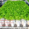 Tubulação do PVC com os furos usados para frutas e verdura