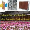 CE Сименс аттестованное ISO едет на автомобиле вентилятор для парника