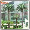 Palmeira artificial plástica do fabricante de Guangzhou