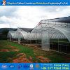 昇進のトンネルのプラスチックフィルムのHydroponicシステム農業の温室