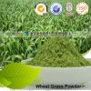 Nutzen- für die Gesundheitauszug-Hersteller-kosteneffektives Weizen-Gras-Puder