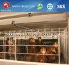 Автоматическое оборудование фермы клетки цыпленка яичка трапа цыплятины для сбывания