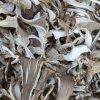 Getrockneter Austeren-Pilz