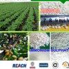 ルートシステムバナナの木肥料のアンモニウムの硫酸塩