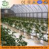 Estufas altas tecnologia hidropónicas para Growing vegetal