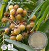 Saponine naturali di Soapnut dell'estratto di Mukorossi del Sapindus dei pulitori 40% -70%