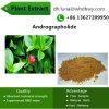 Fábrica do extrato da planta de 98% o efeito antiviroso Andrographolide