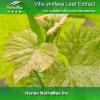 Extracto natural de la hoja del 100% Vitis vinifera (relación de transformación: 4:1 ~20: 1)