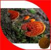 Polvo Cáscara-Quebrado de la espora de Ganoderma Lucidum (seta de Reishi)